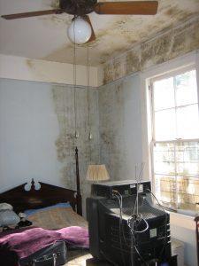Indoor Mold